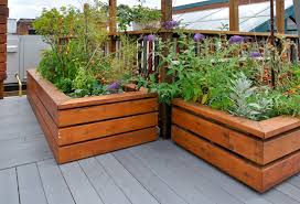 chic wood for raised bed garden is treated lumber safe for