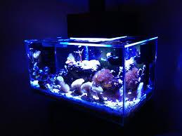 fluval edge marine light my 6 gallon fluval edge build page 5 reef sanctuary