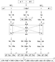 mendelism new insights from gregor mendel u0027s lectures in brno