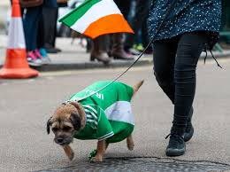 here are your st patrick u0027s day dogs who2