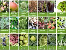 How To Grow Vegetables by Growguides For Over 180 Different Vegetables Herbs Fruit And