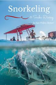 shark ray alley belize dive belize pinterest sharks belize