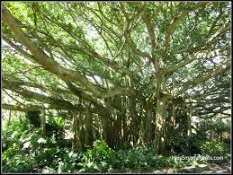 cypress gardens miss smarty plants