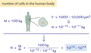 How Many Chromosomes Does A Somatic Cell Have How Many Cells Are There In An Organism