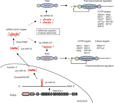 a regulatory role for microrna 33 in controlling lipid metabolism