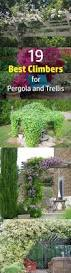 best 25 grape vine trellis ideas on pinterest fruit tree garden