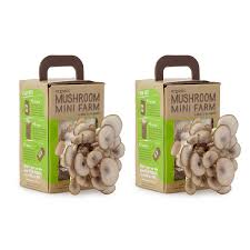mushroom kit oyster mushroom garden grow box uncommongoods