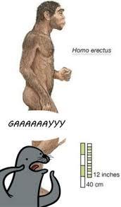 Seal Meme Gay - i m not homophobic that s just gay 24 pics izismile com