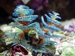 226 best images about christmas tree worms on pinterest