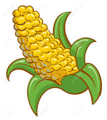 1 222 corn stalk stock illustrations cliparts and royalty free