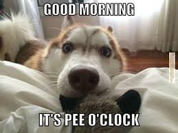 Cute Good Morning Meme - good morning meme cute lekton info