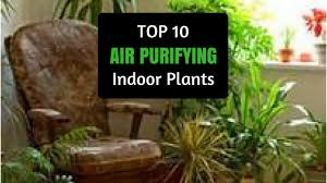 best plants for air quality natural air purifier top 10 best plants for air quality air