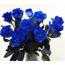 Blue Roses Blue Roses
