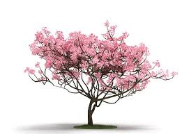 3d pink tree on grass cgtrader