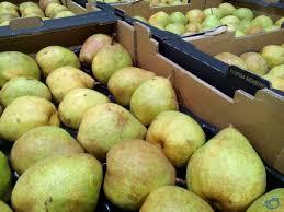 mail order fruit d f mccarthy ltd on great tasting comice pears