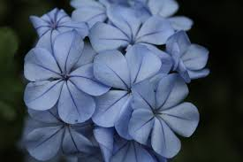blue and purple flowers free photo blue purple flowers bloom free image on pixabay