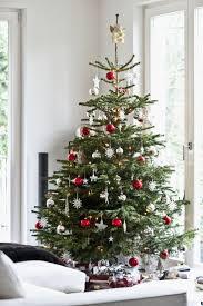 real mini trees to sendreal tree gift