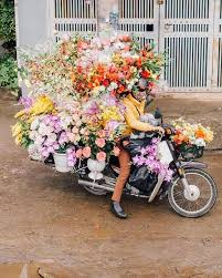 just flowers florist flowers just flowers flowers flower and flora