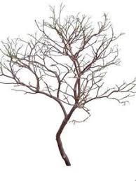 manzanita tree branches tree centerpiece ebay