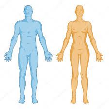 Human Anatomy Full Body Picture Female Male Body Shapes U2013 Human Body Outline Anterior View