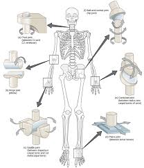 diagram of bones in elbow and wrist of child articles journal of