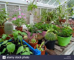 plants inside greenhouse in pots and colourful planters in spring