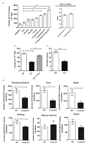 diabetes regulates fructose absorption through thioredoxin