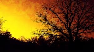 amazing tree silhouette 6770425