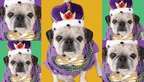 mardi gras dog mardi gras dog parade community calendar the chronicle