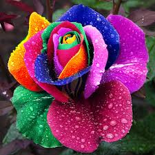 different color roses yellow roses different color 14 meanings what do the colors