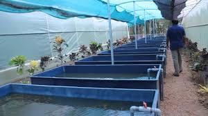 florida native aquatic plants a video tour of the still water aquatic u0027s aquatic plant farm youtube