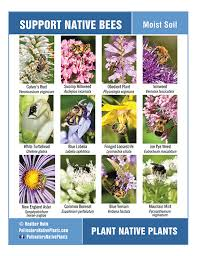 support bees plants that grow in moist soil pollinators