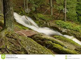New Jersey forest images New jersey forest stream stock image image of foliage 10168099 jpg