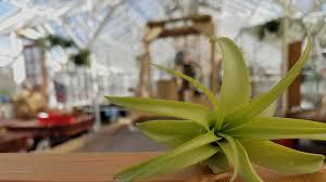 Air Plants Air Plants Art Rhode Island One Earth Air Plants