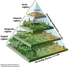 World Biomes Map by A Pyramid Map Of The World U0027s Biomes Big Think