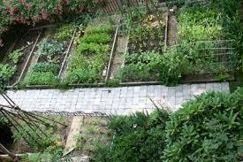 Backyard Vegetable Gardening by Simple Backyard Vegetable Garden Decorating Clear