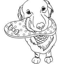 Cute Dog Coloring Pages Hellokids Com Dogs Coloring Pages