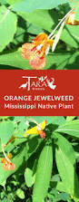 5 native plants 34 best mississippi native plants images on pinterest native