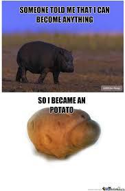 Hippo Memes - hippo potato by reikary meme center