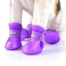 s shoes boots nz puppy shoes boots nz buy puppy shoes boots from best