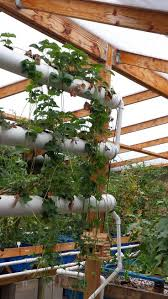 223 best aquaculture images on pinterest hydroponic gardening