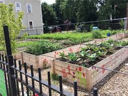 providence community gardens sankofa gardens in west end of