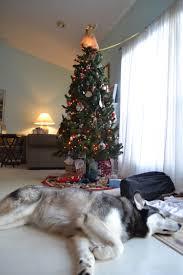 christmas the zarb homestead