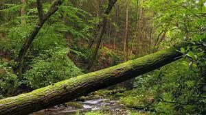 wallpaper 1920x1080 tree trunk moss wood hd 1080p