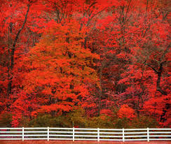 america beautiful autumn peak fall foliage dates 48