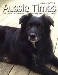 h cross australian shepherds turkey run australian shepherds aussie times