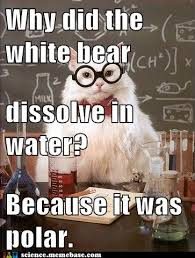 Funny Science Meme - funny animal bear pictures 17