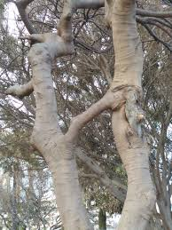 Tree Trunks Meme - put me like 盞 these two tree trunks share one branch