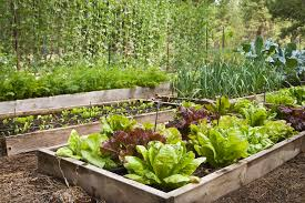 fall vegetable gardening tips