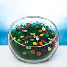 low bowl terrarium filled with colored forever flowers